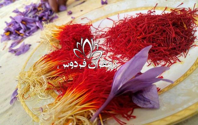 قیمت خرید زعفران عمده از کشاورز