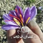 قیمت زعفران در بورس مشهد